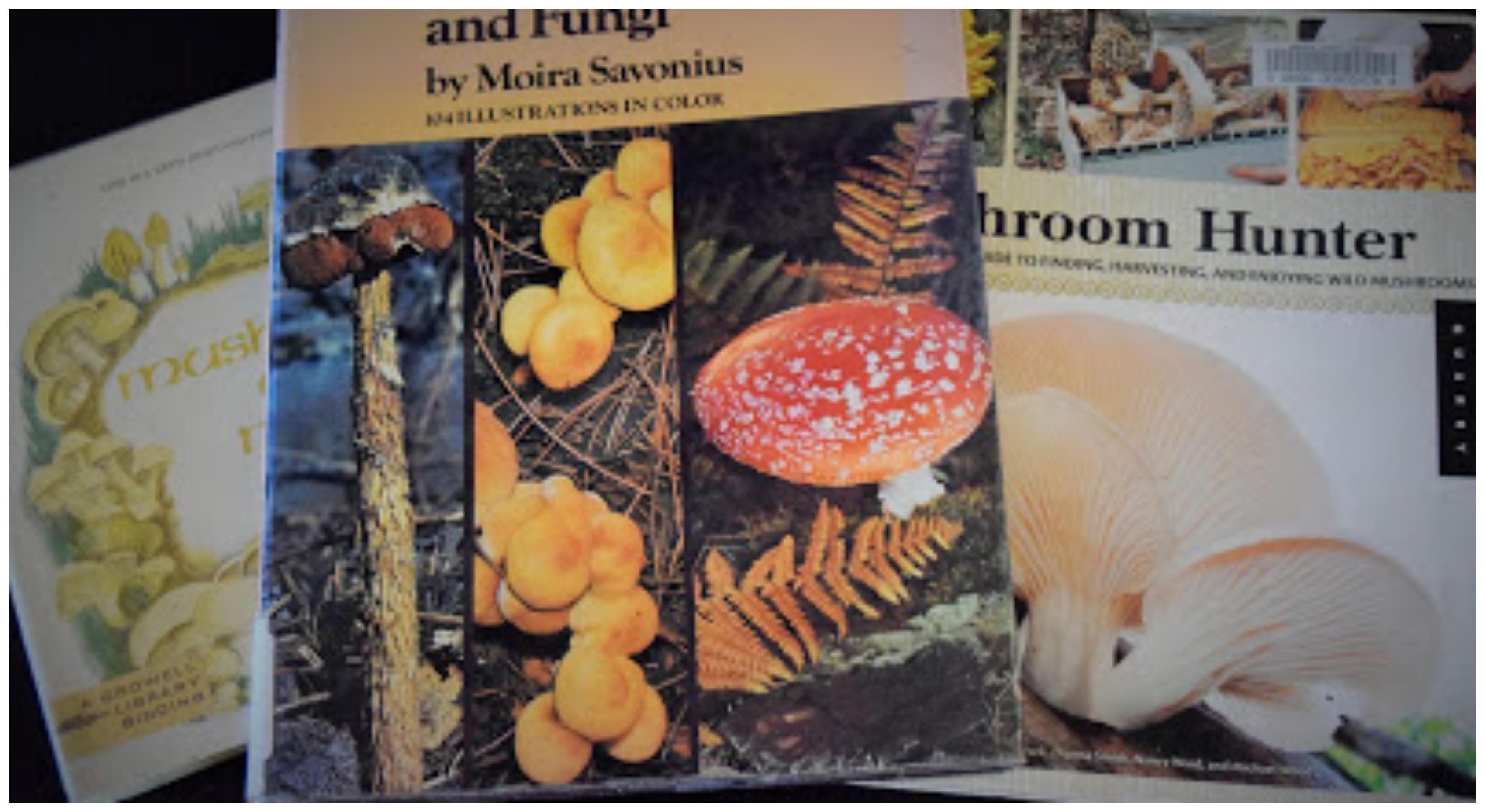 Mushroom fun (15 of them :)) – Homegrown Adventures