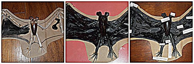 Lava Beds Caving and Bat Fun !!!!