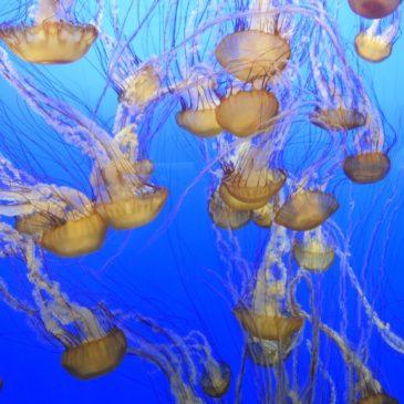 Jellyfish Fun….