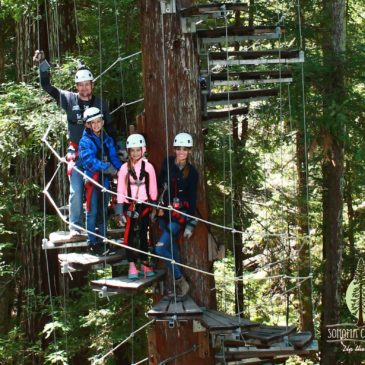 Tree Top Adventure: Zipline