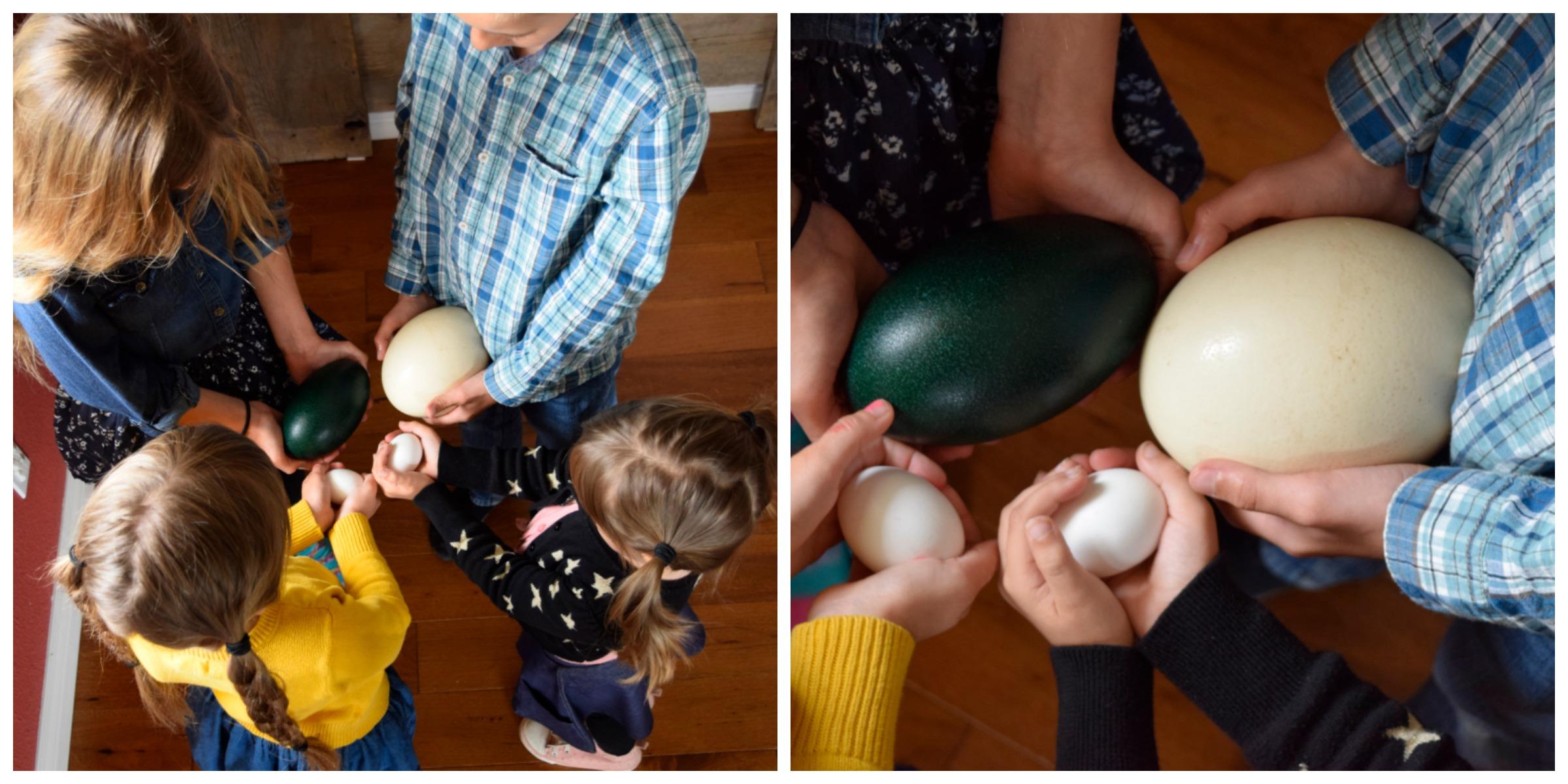ostrich egg 2