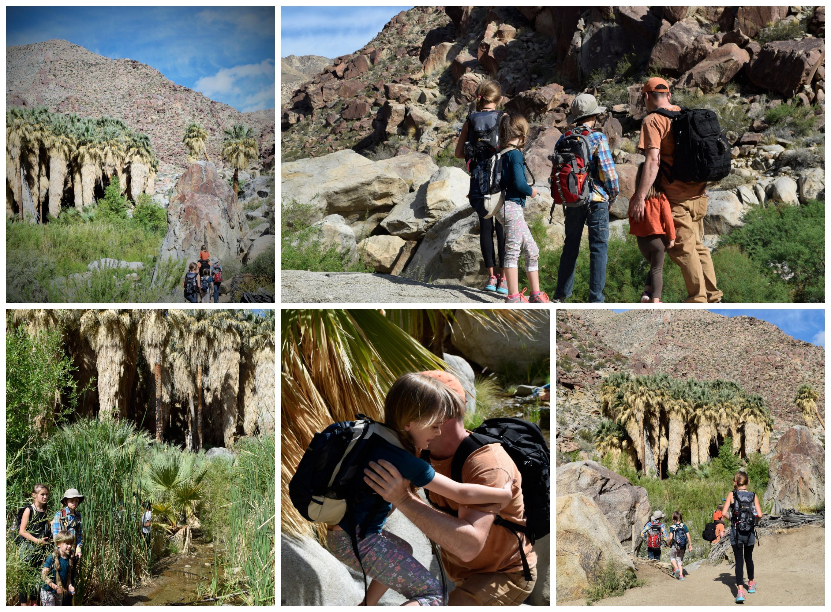 palm canyon hike 1