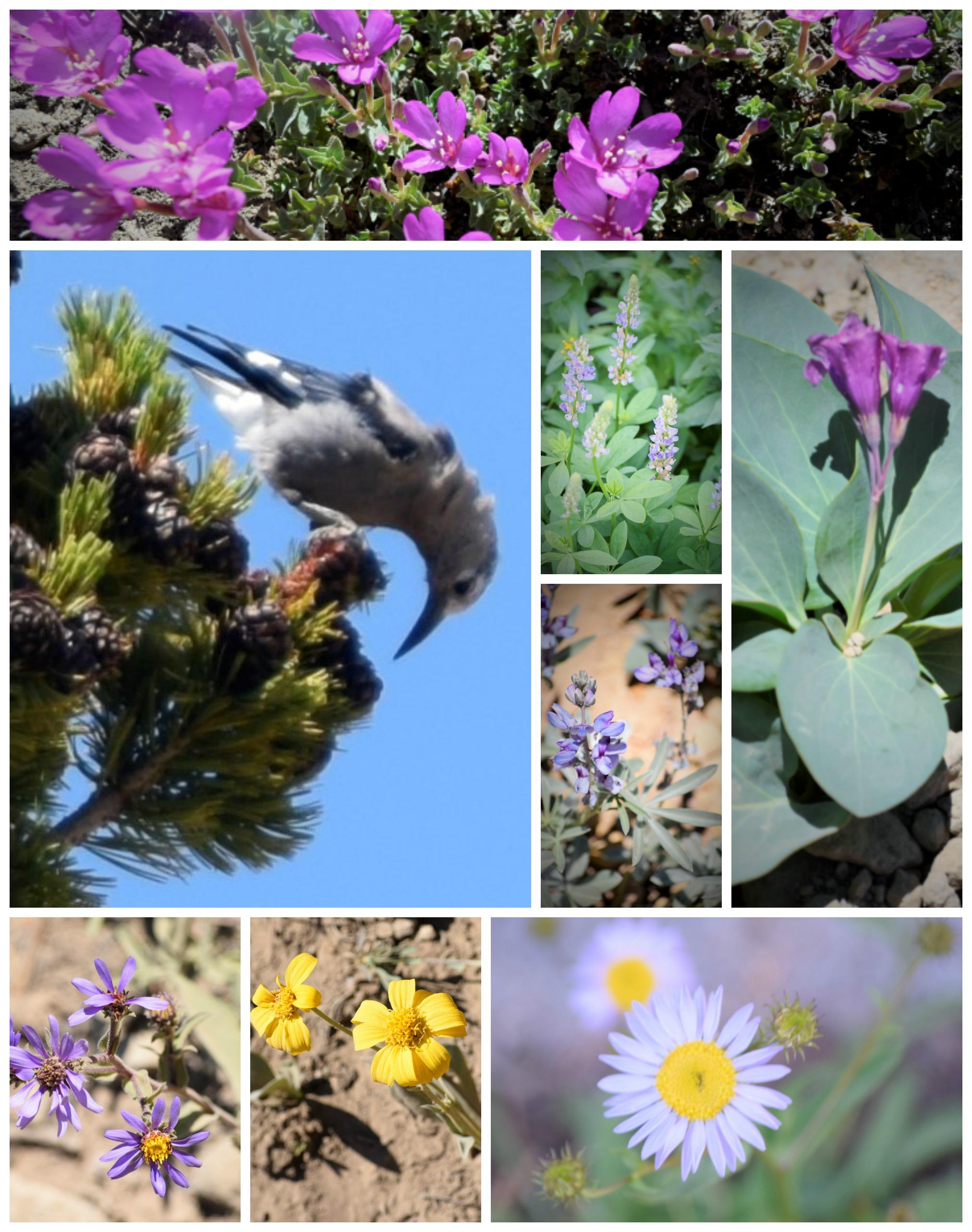 beokeoff mountain flowers