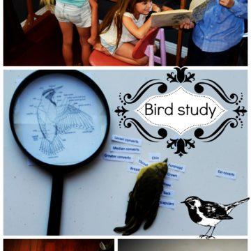 Let's Celebrate: Birds