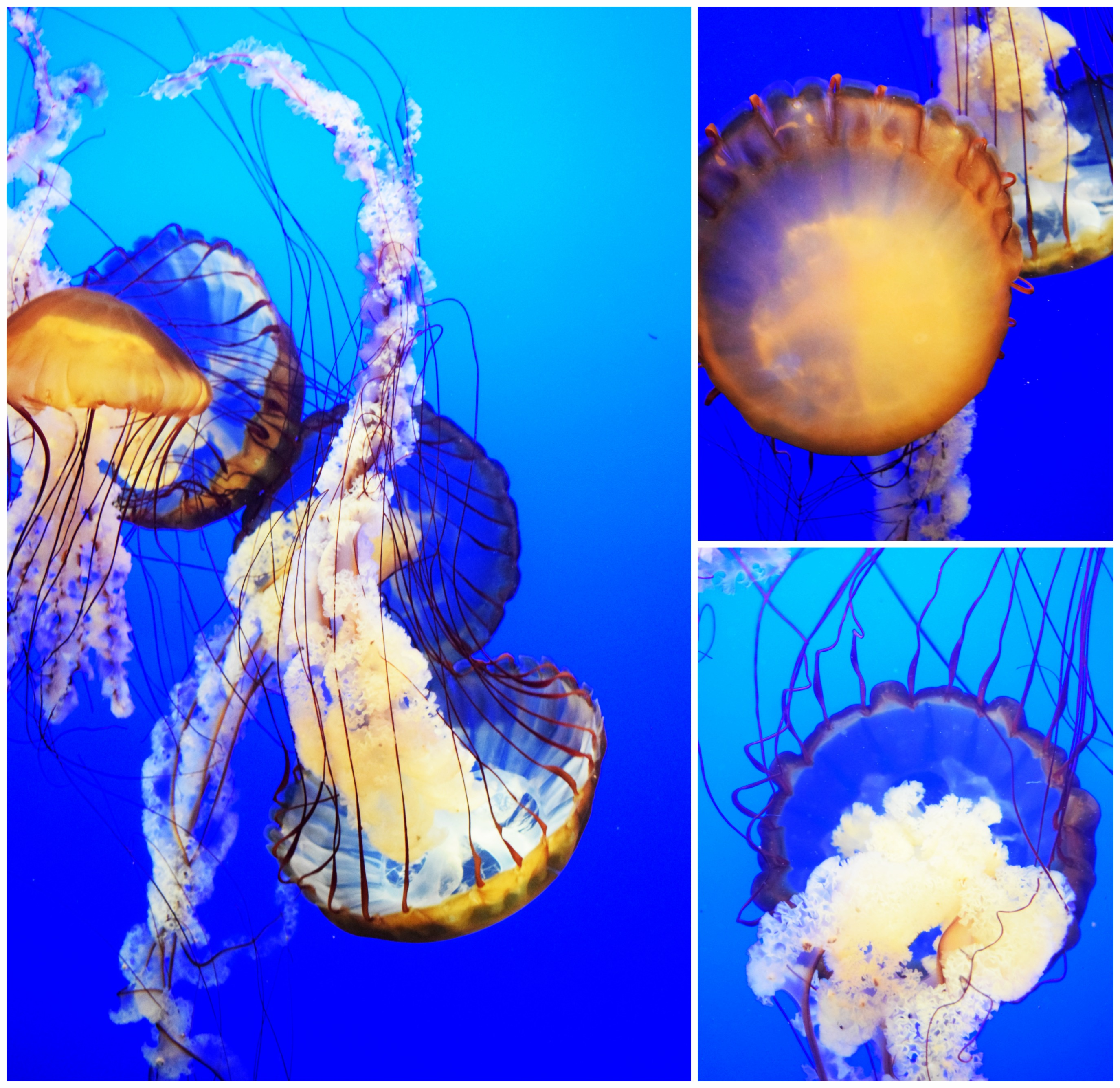 jelly-fish-2