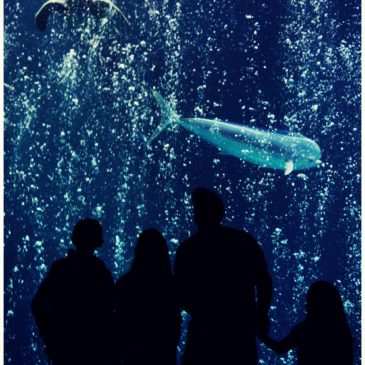 Let's Celebrate: Sea Life